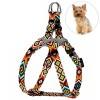 Шлея для Собак Мелких Пород BronzeDog Urban Йорк Оранжевая